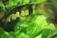 I germogli e la foglia di fiore della primavera con le gocce di pioggia si chiudono sulla foto Fotografia Stock Libera da Diritti