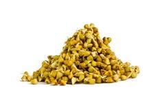 I germogli verdi di due giorni del grano saraceno Fotografia Stock Libera da Diritti