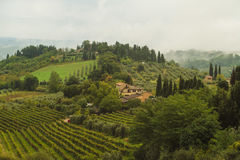 I giacimenti dell'uva in Toscana, Italia fotografie stock