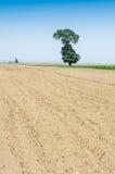 I giacimenti e gli alberi di grano Fotografia Stock Libera da Diritti
