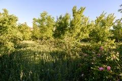 I giardini delle rose nel ` Gouna, Marocco di Kalaat m. Fotografia Stock Libera da Diritti