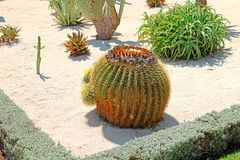 I giardini di Bahai comprendono le aree con i cactus, yucche ed agavi, crescenti nei letti di pianta separati Immagini Stock Libere da Diritti