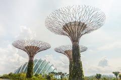 I giardini di Singapore dalla baia Immagine Stock