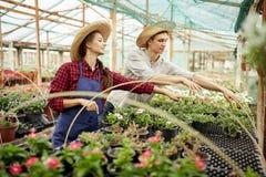 I giardinieri della ragazza e del tipo in cappelli di paglia scelgono i vasi con le piantine del fiore in serra un giorno soleggi immagini stock