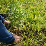 I giardinieri hanno preso gli alberi alla terra fotografie stock libere da diritti