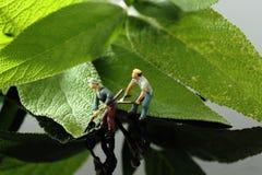 I giardinieri miniatura del modello di scala con gli strumenti che tagliano la salvia va Fotografia Stock Libera da Diritti
