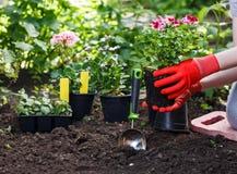 I giardinieri passa la piantatura dei fiori nel giardino, fine sulla foto immagini stock