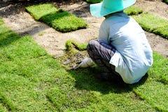 I giardinieri stanno piantando l'erba fotografia stock