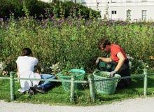 I giardinieri tendono ai letti di fiore fuori del palazzo di Nymphenburg fotografia stock