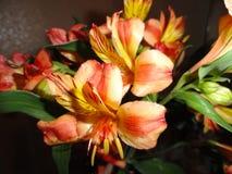 I gigli luminosi delicati dei fiori più bei e più favoriti immagine stock libera da diritti
