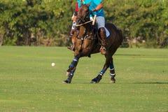 I giocatori di polo stanno colpendo Fotografie Stock Libere da Diritti