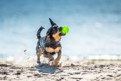I giochi divertenti del cane si avvicinano all'acqua, spruzzante le goccioline fotografie stock libere da diritti
