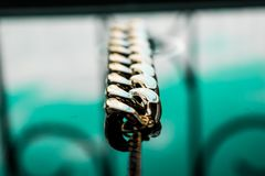 I gioielli dell'oro sono tonalità gialle e differenti Gioielli dalla lega del metallo con i modelli openwork sulla superficie rif immagine stock libera da diritti