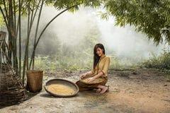 I giovani agricoltori delle donne raccolgono o separano il Th dell'agricoltura del seme del riso Immagine Stock