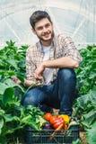 I giovani agricoltori stanno coltivando le verdure organiche Fotografia Stock Libera da Diritti