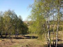 I giovani alberi di betulla sulle banche del fiume dentro possono Fotografie Stock Libere da Diritti