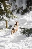 I giovani cervi saltano nella neve Immagine Stock Libera da Diritti