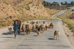 I giovani conducono il ragazzo e la moltitudine di pecore Giordano Fotografia Stock Libera da Diritti