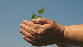 I giovani germogliano in mani dell'agricoltore le mani dei giardinieri tengono una piantina verde in loro palme contro il cielo video d archivio