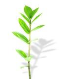 I giovani tiri delle piante Fotografia Stock Libera da Diritti