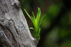 I giovani tiri di vecchi alberi con il fondo della sfuocatura Fotografia Stock
