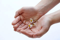 I give you the spring. I have a gift for you. I give you the spring Royalty Free Stock Image