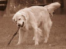 I Got Me A Stick Stock Photo