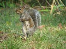 I Got A Nut Stock Photo