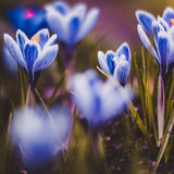 I gräs Royaltyfria Foton