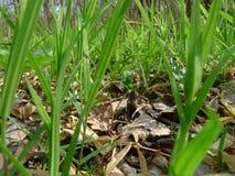 I gräset Royaltyfri Fotografi