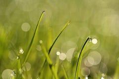 I gräset Arkivfoton