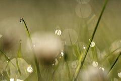 I gräset Royaltyfri Foto