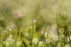 I gräset Fotografering för Bildbyråer