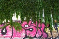 I graffiti murano con l'edera Immagini Stock Libere da Diritti