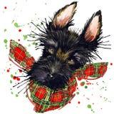 I grafici della maglietta del cane del terrier scozzese, illustrazione del terrier scozzese con l'acquerello della spruzzata hann illustrazione vettoriale