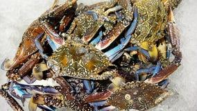 i granchi nel ghiaccio da vendere in frutti di mare comperano fotografia stock libera da diritti