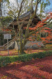 I grandi alberi rossi davanti al pavillion, Osaka, Giappone fotografia stock libera da diritti