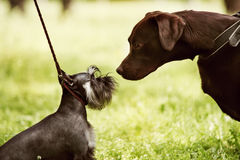 I grandi e piccoli cani rendezvous nel parco immagini stock