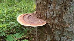 I grandi funghi attaccano ai tronchi di albero, i funghi, i funghi tossici, parassiti immagini stock