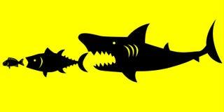 I grandi pesci predano ai più piccoli pesci Immagini Stock