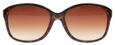 I grandi tortois marroni degli occhiali da sole sgusciano il colore rosso della lente della struttura isolato contro un fondo bia Fotografia Stock