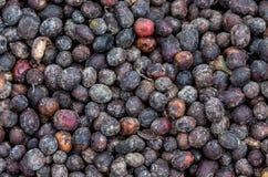 I grani di caffè maturo si trovano sotto il sole Primo piano La Tanzania Piantagione di caffè Immagini Stock