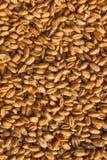 I grani di grano nella fine sulla vista perfezionano il ima di struttura dell'agricoltura Fotografia Stock Libera da Diritti