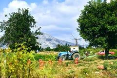 I Greci puliscono le patate del raccolto fotografie stock