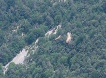 I grifoni vola sulle gole du Verdon fotografia stock libera da diritti