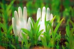 I guanti bianchi del silicio fanno il giardinaggio nessuno immagini stock