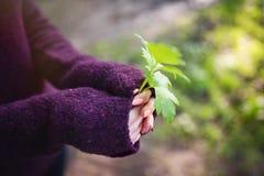 I händerna av sidorna av växten arkivbilder