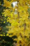I hösten Royaltyfri Fotografi