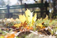I hösten parkera där är ett gult blad royaltyfria bilder