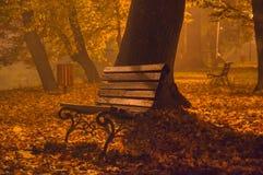I hösten parkera på natten royaltyfri fotografi